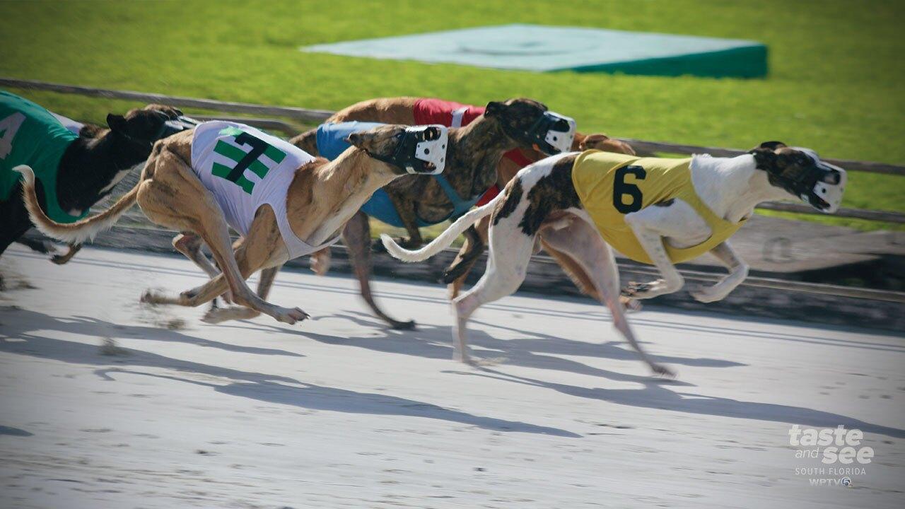 Palm Beach Kennel Club runs its last live greyhound races