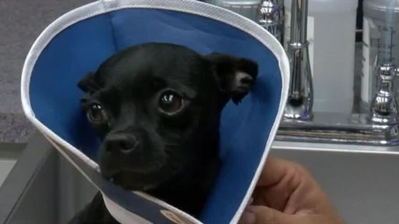 Dog rescue group calls cruelty case worst ever