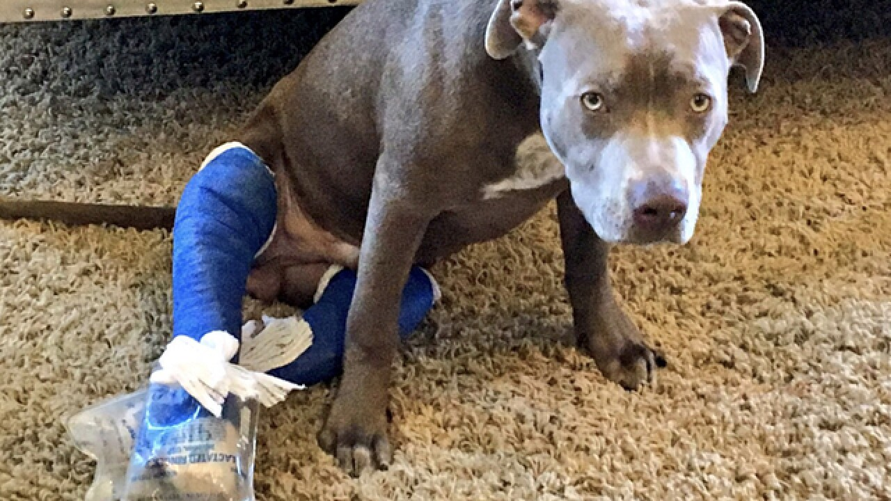 Woman claims dog was injured at pet daycare