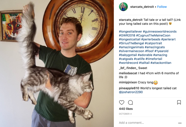 PHOTOS: Record Breaking Cats are big stars on Instagram