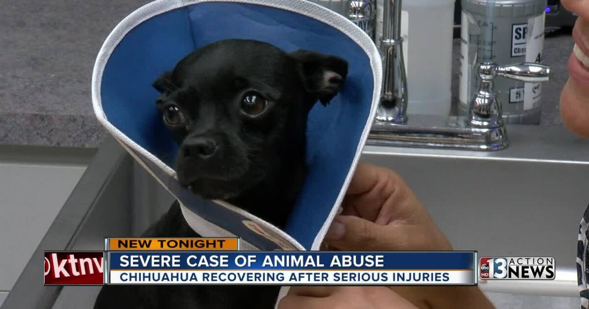 Dog rescue group calls cruelty case worst they've seen