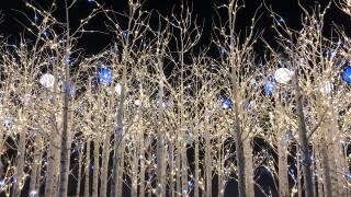 GALLERY: 2018 Blossoms of Light at Denver Botanic Gardens