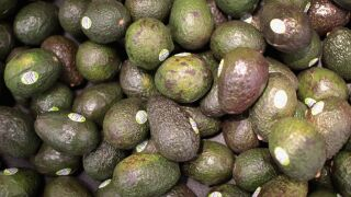 No more avocados? It's possible is Trump shuts down the southern border