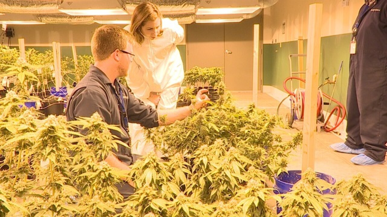 Behind-the-scenes of medical marijuana in FL