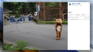 Japanese zoo staff chase furry fake lion in escape drill