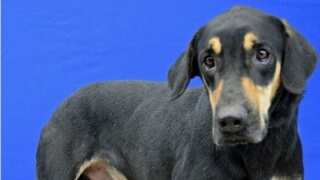 Lafayette Animal Shelter Open this Saturday for Adoptions