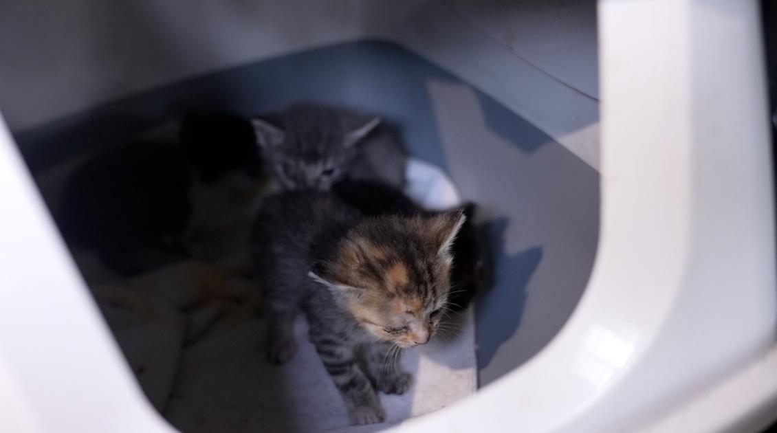 Kittens in need of help