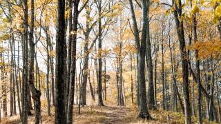 Forest fall foliage