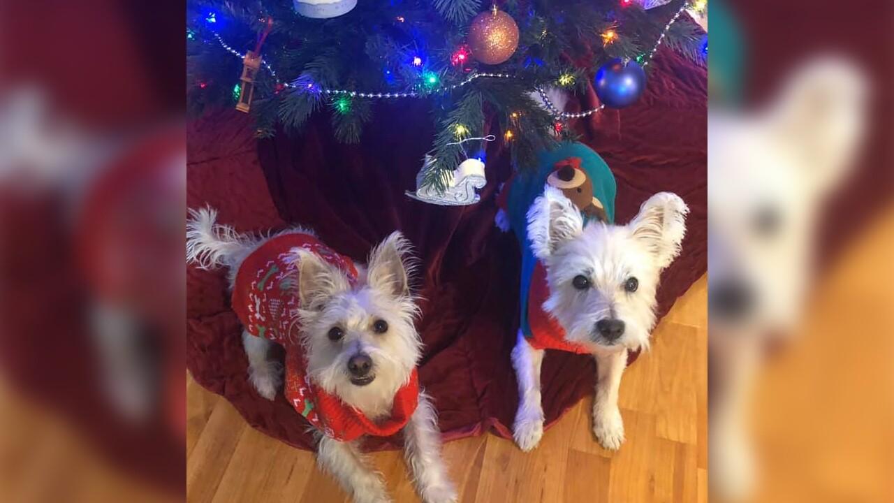 Winston and Tucker from Teresa Milligan.jpg
