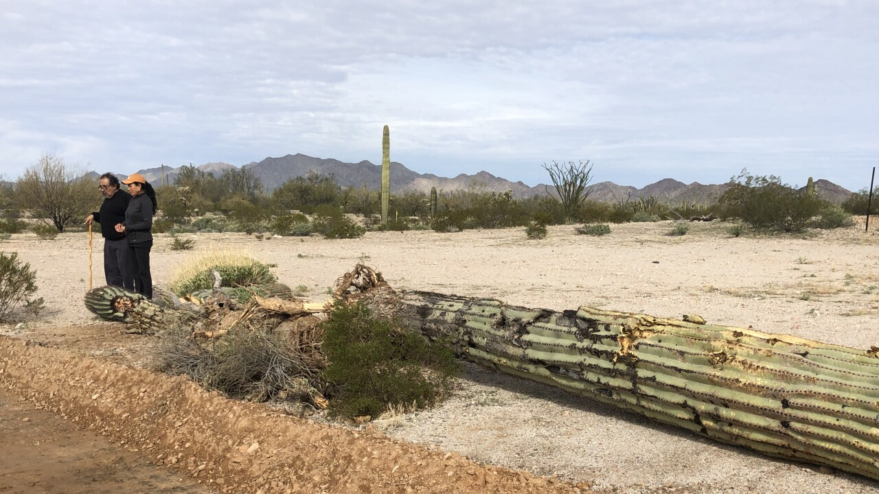 Copy of Saguaro_RG Construction.JPG