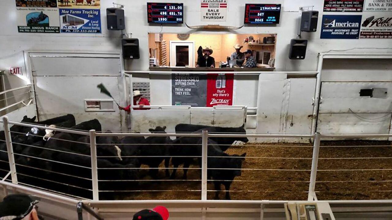 Stockman's Livestock in Dickinson, ND.jpg 2.jpg