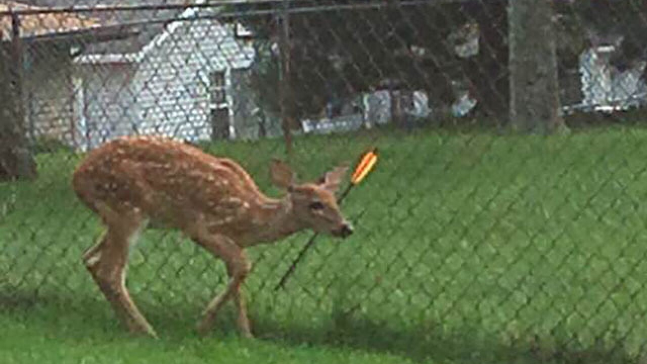 Deer with bolt in head on the loose in Parma