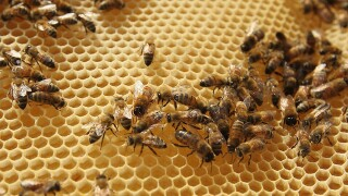The Buzz with Bees: Federal regulations change how beekeepers get antibiotics for bees