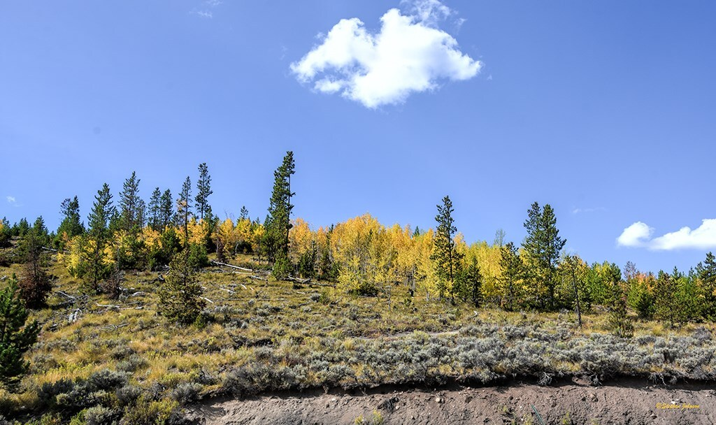Near the Gold Hill Trailhead on Highway 9 leading towards Breckenridge_by Steve Johnson