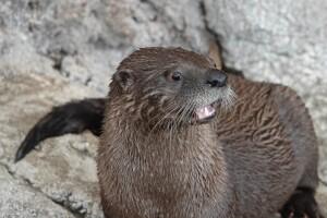 Fisher at Otter Creek (4).jpg
