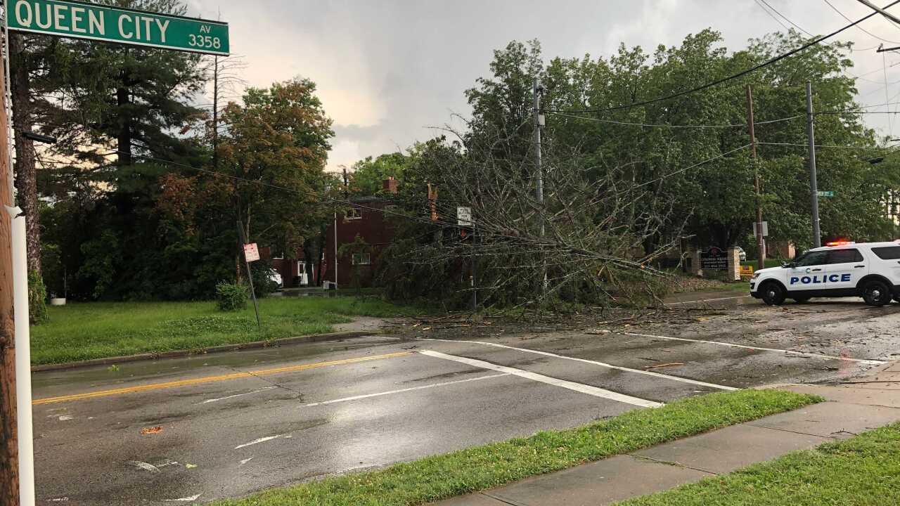 Tree Down at Werk and Queen City.jpg
