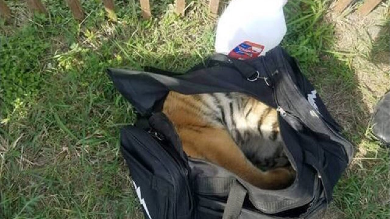 Tiger found in abandoned duffel bag