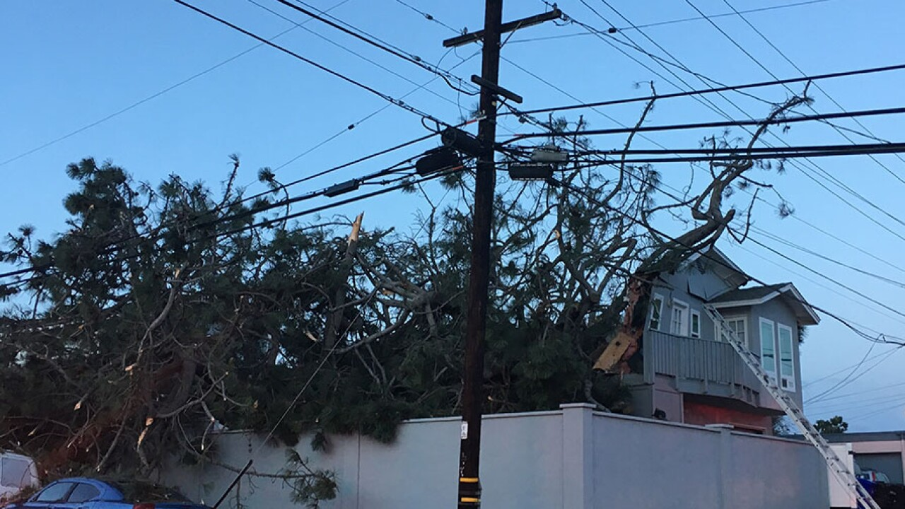 tree_home_point_loma_heights4_012119.jpg
