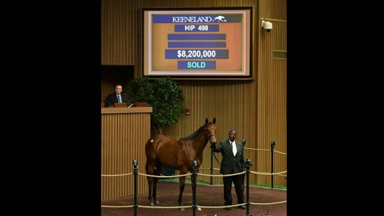 2019 $8.2 million filly.jpg