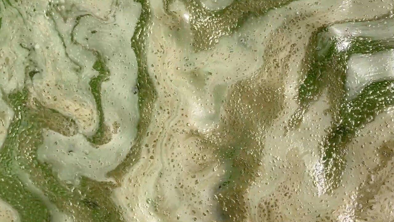 Algae at Port Mayaca, April 13, 2021