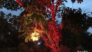 New 'Gardens Of Lights' event hits Mounts Botanical Garden