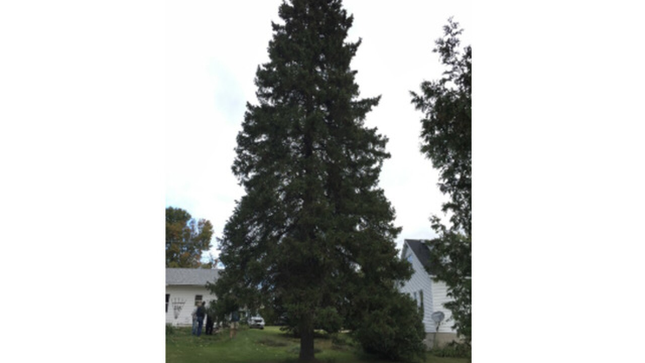 Official state Christmas tree picked