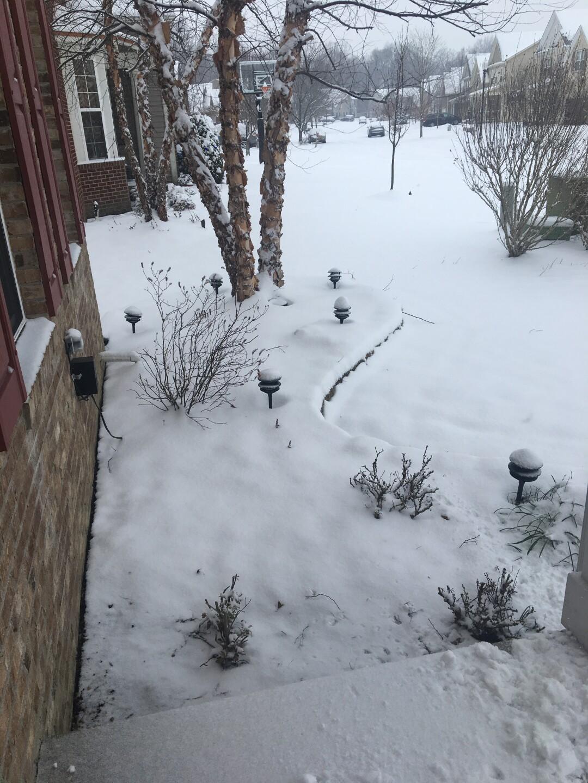 January 12 Snow (5).JPG