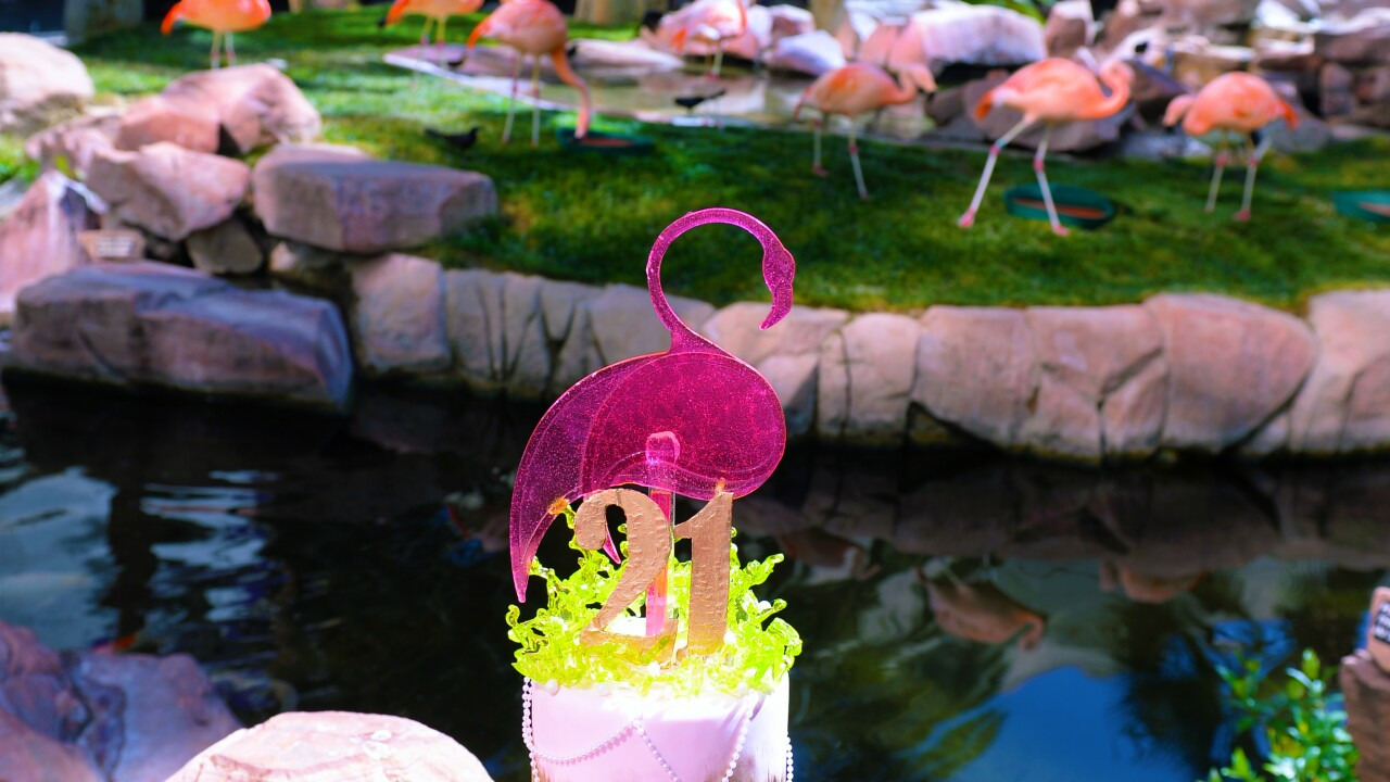 Flamingo Las Vegas_Wildlife Habitat_Peachy's Birthday_BSP_7360.JPG