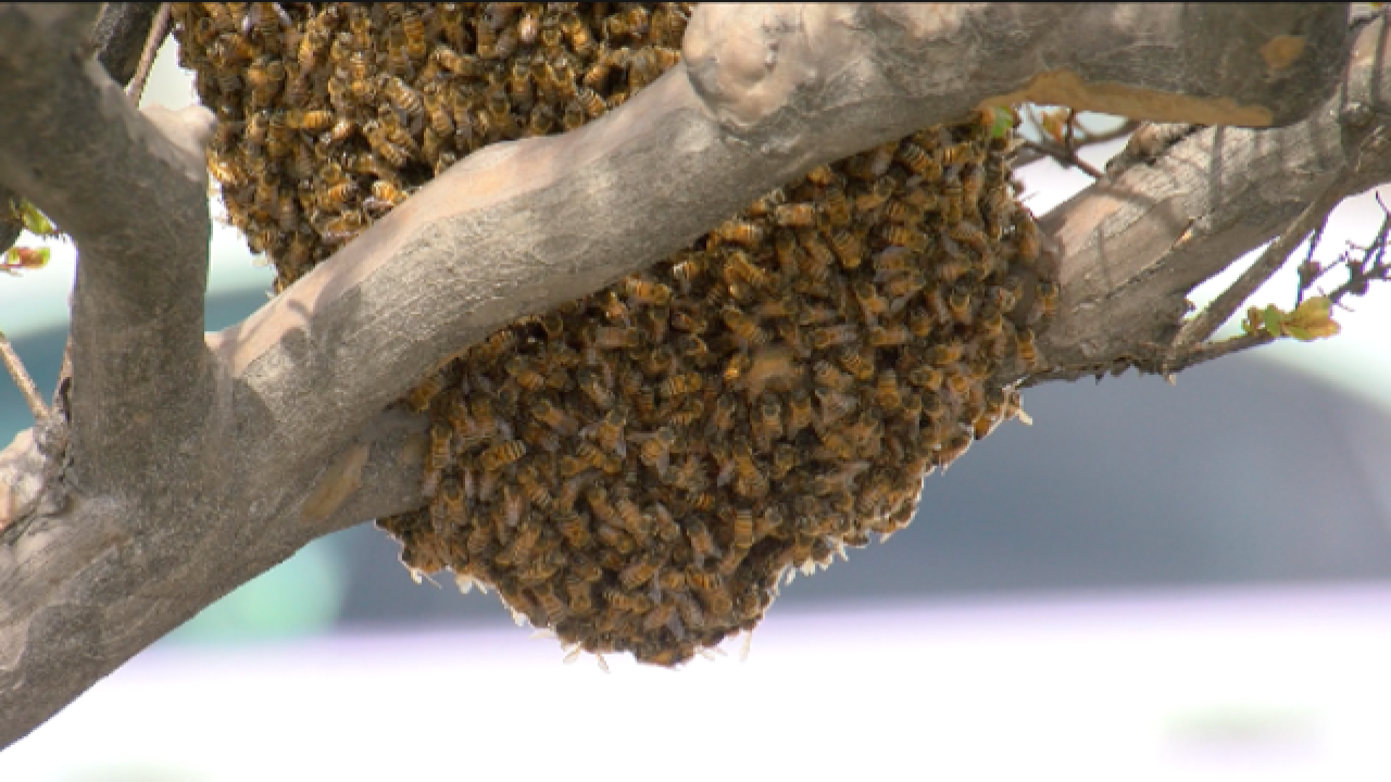 Bee hive found in Downtown Bakersfield