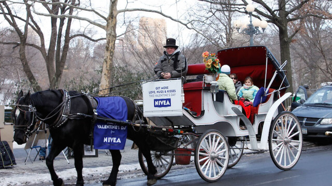 Chicago may get rid of horse drawn carriage rides