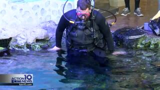 Students can dive into marine animal care careers at the Texas State Aquarium this summer