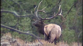 elk still.jpg