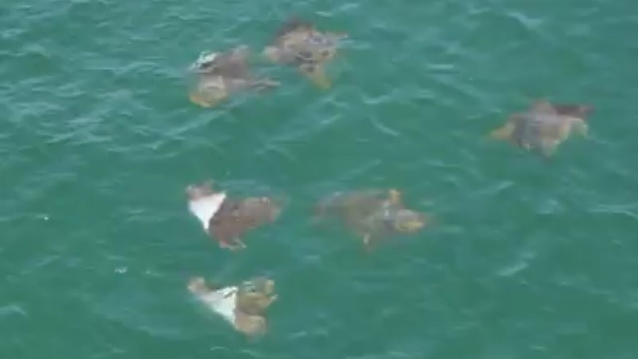 What's going on with the rays at Jennette's Pier?