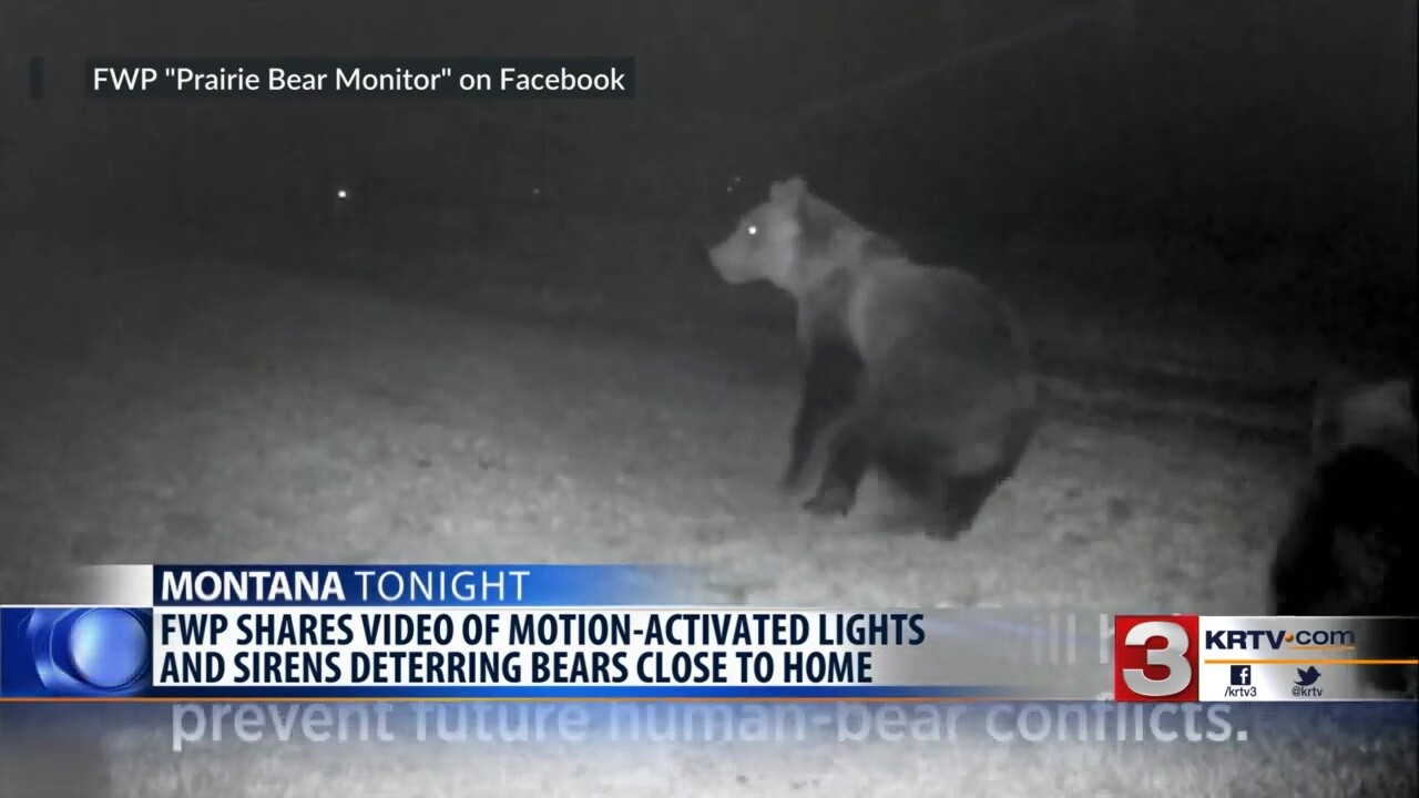 Prairie Bear Monitor provides details on 2019 incidents