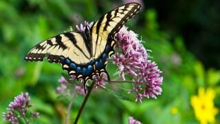 Norfolk Botanical Garden hosts third annual ButterflyFestival