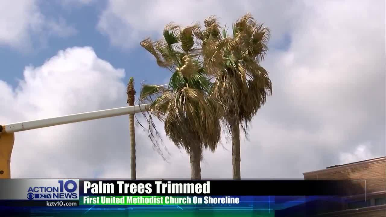Palm trees trimmed at First United Methodist Church