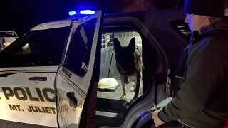 Mount Juliet Police K9 Majlo - Pizza Delivery Arrest 120419.jpg