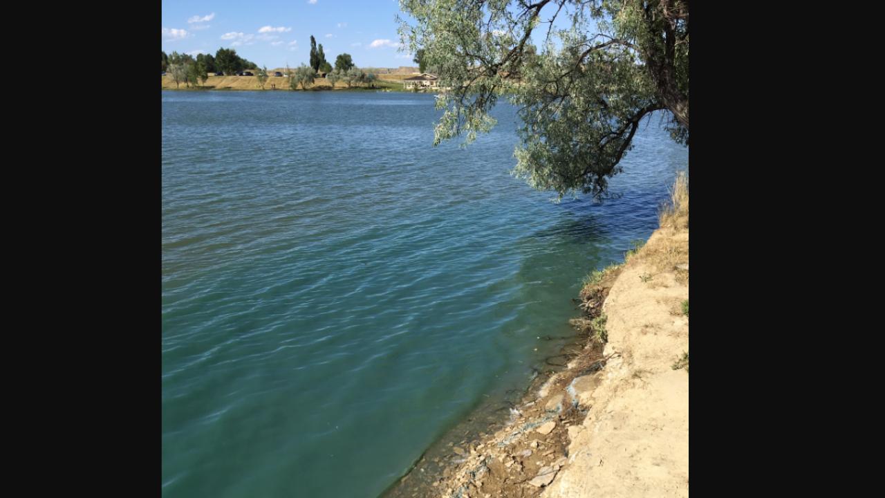 lake elmo toxic bloom.PNG
