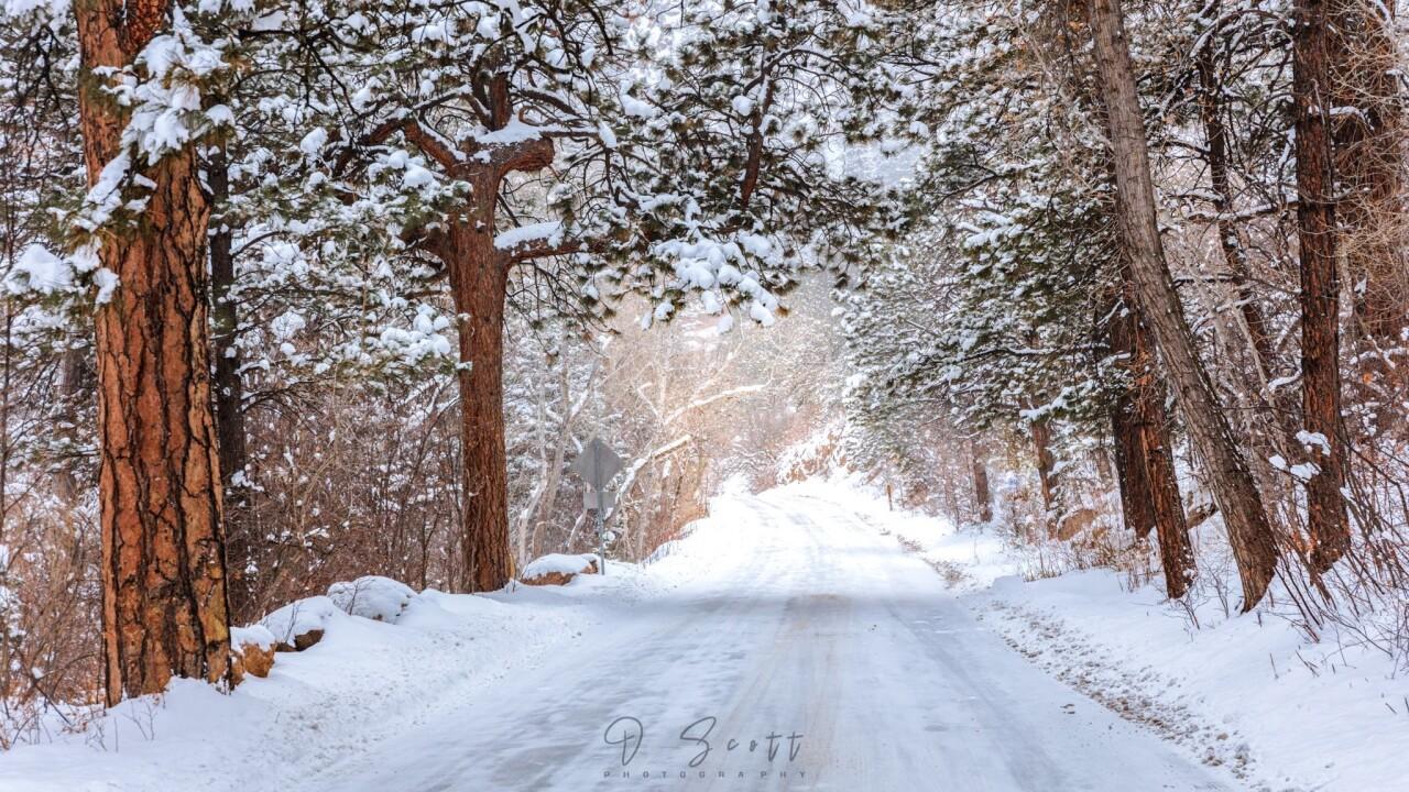 Daniel Forster Cheyenne Canyon Road