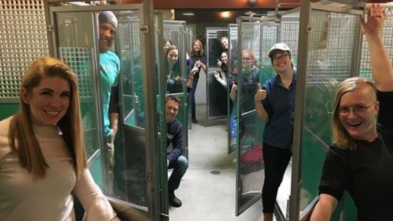 Almost every animal in Murray humane society shelter adopted during Black Friday