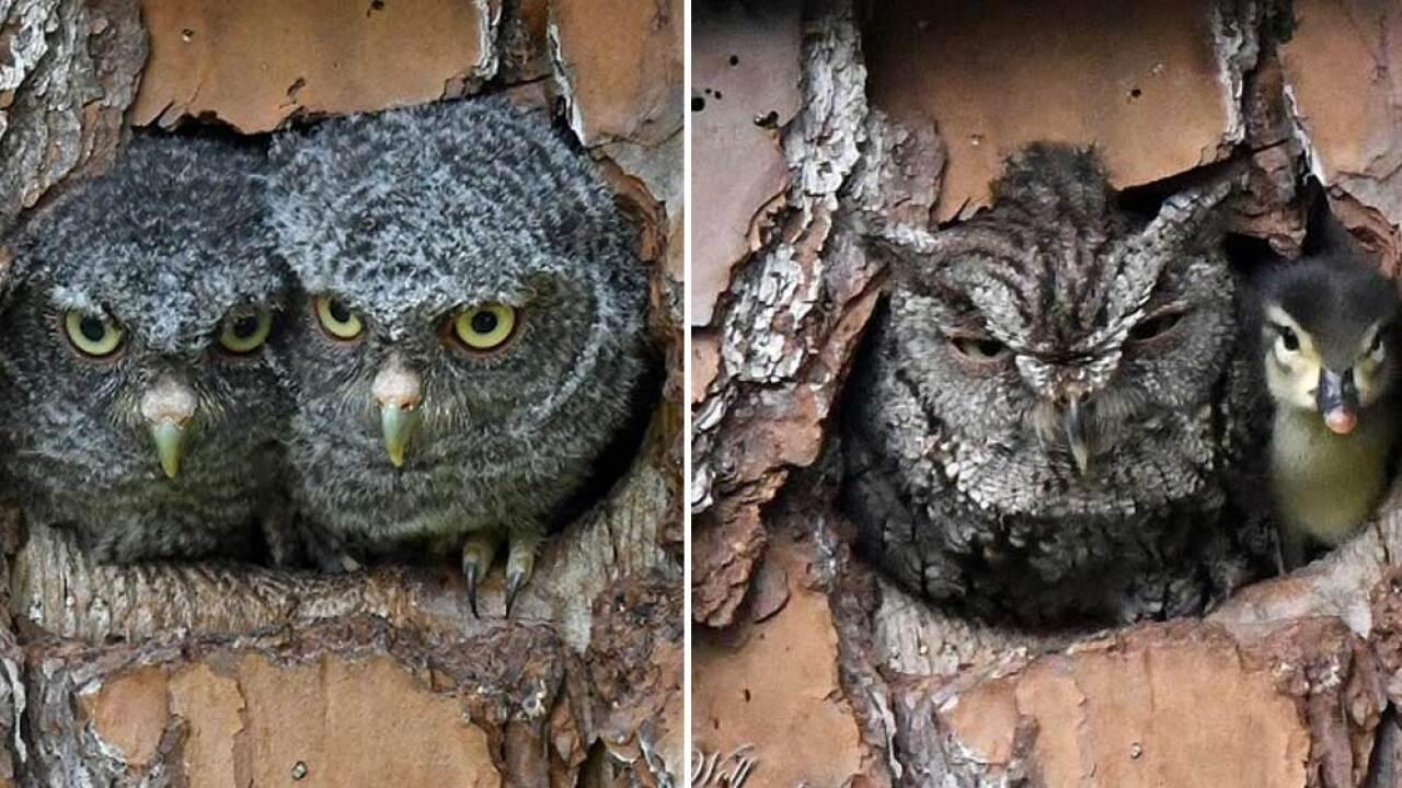 wptv-baby-owls-birdbox.jpg
