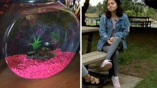 national city native forced to give up beta fish before southwest flight