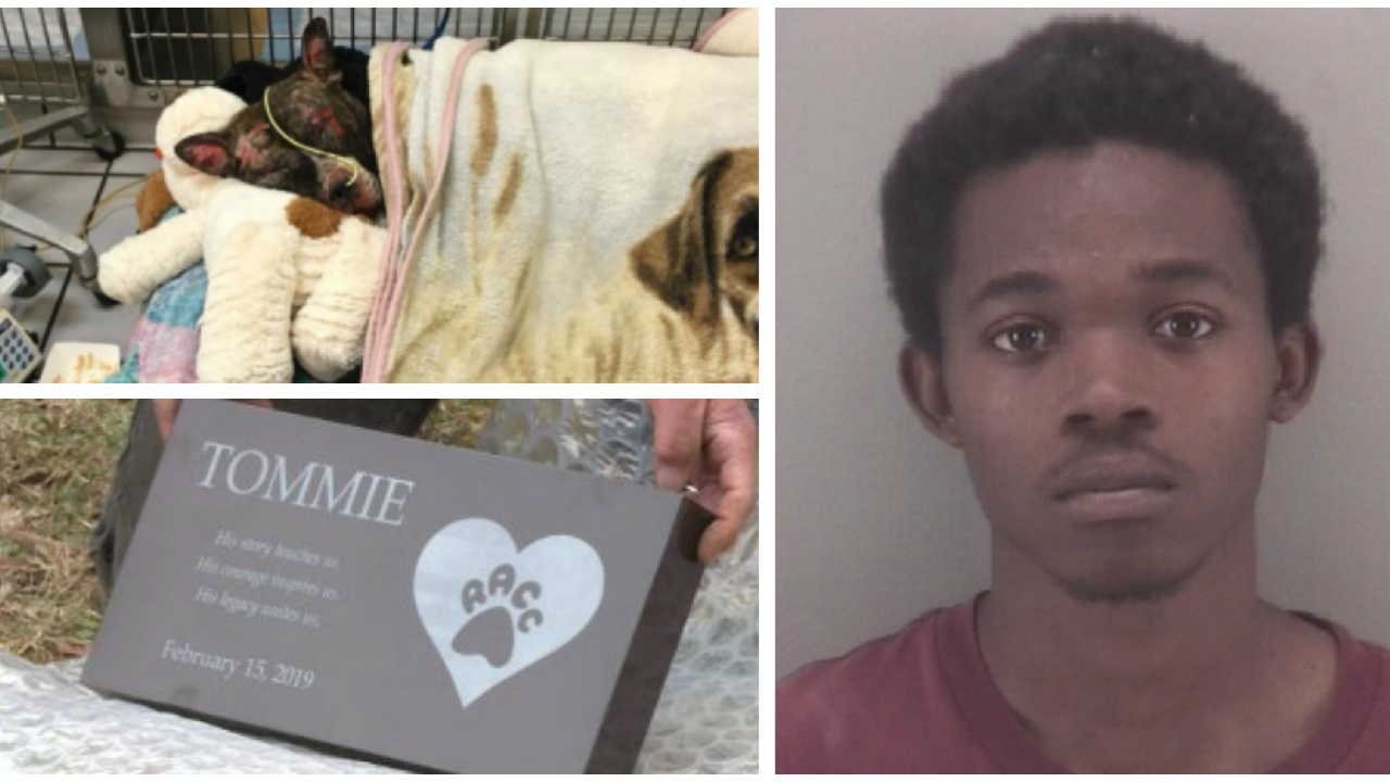Man arrested for killing Tommie, the dog set on fire in a Richmond park