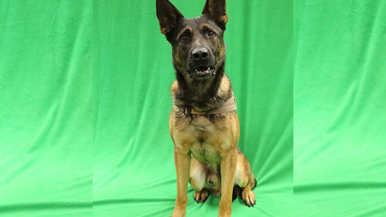 Sheriff's Office K9 missing in Manatee County