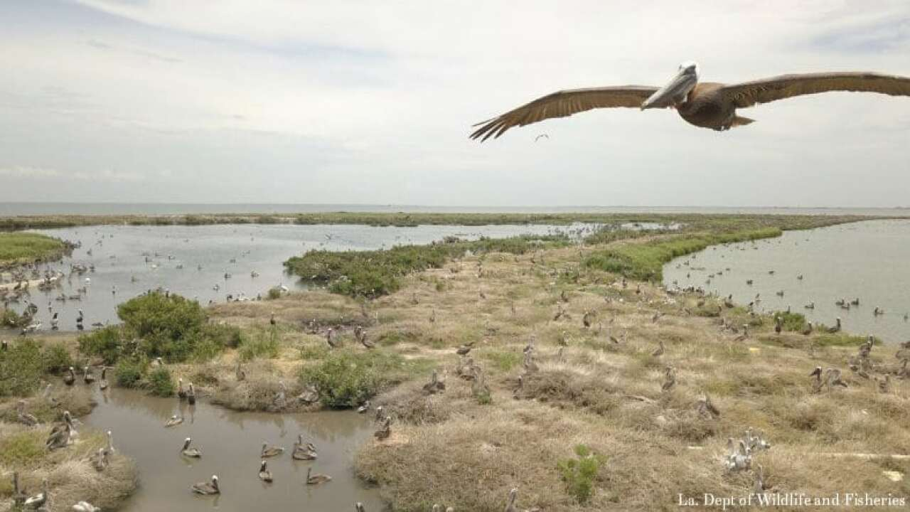 Louisiana seeks to make more room for namesake pelicans