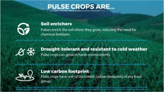 """February 10 is """"World Pulses Day"""""""