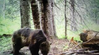 grizzlytrailcam.jpg