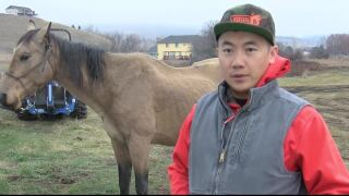 Horse is back home after Montana backcountry adventure