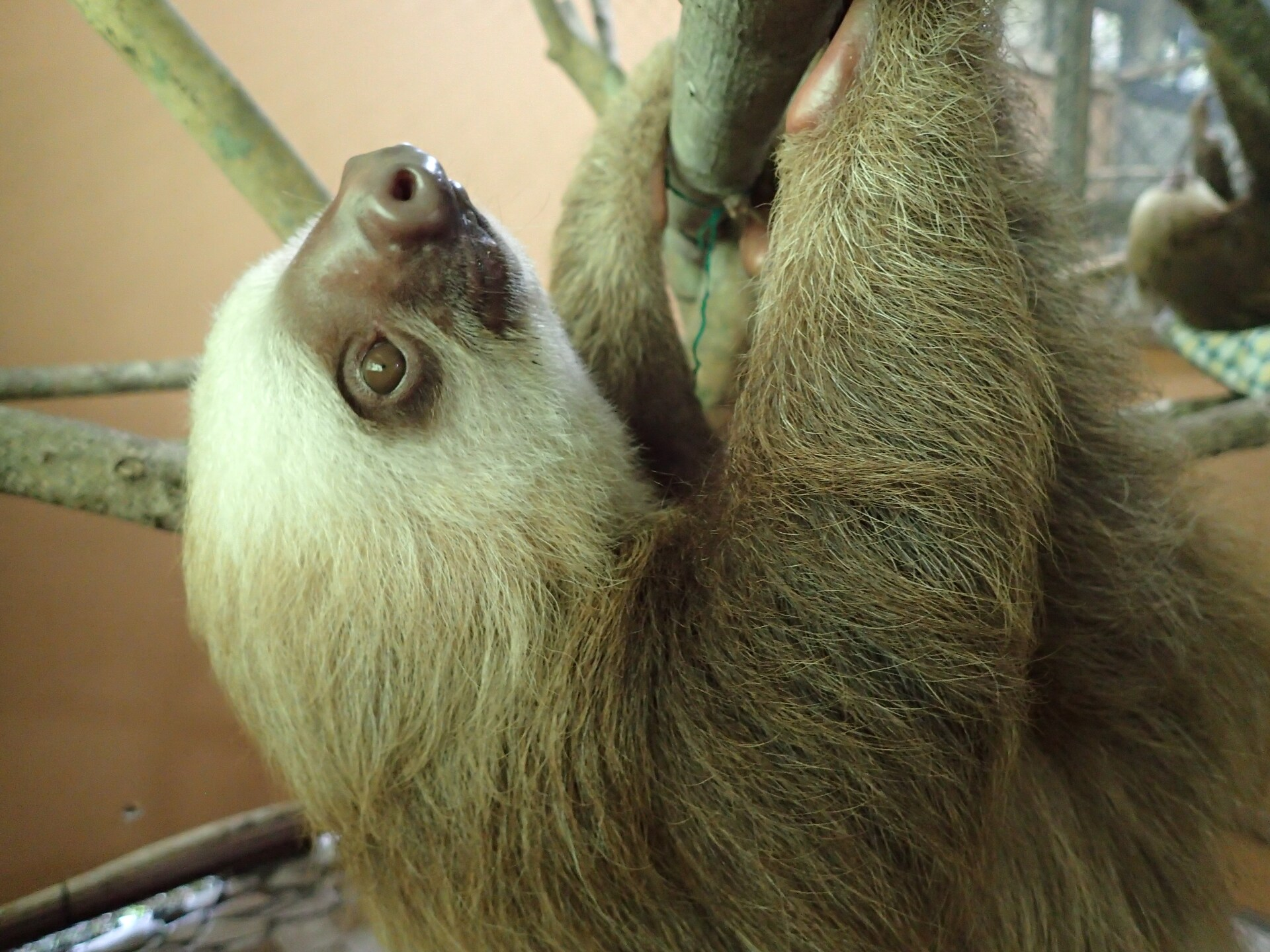 Baby Sloths (18).JPG