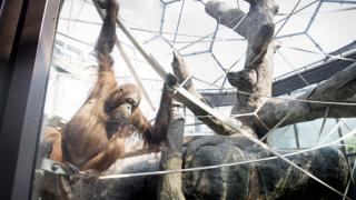 Cleveland Metroparks Zoo RainForest Exhibit